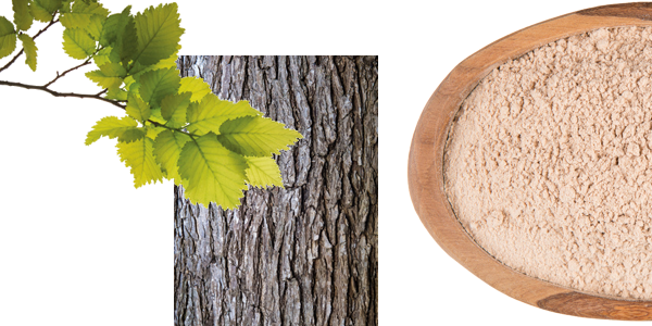 Lillys_Bar_Slippery_Elm_Bark_Ulmenrinde